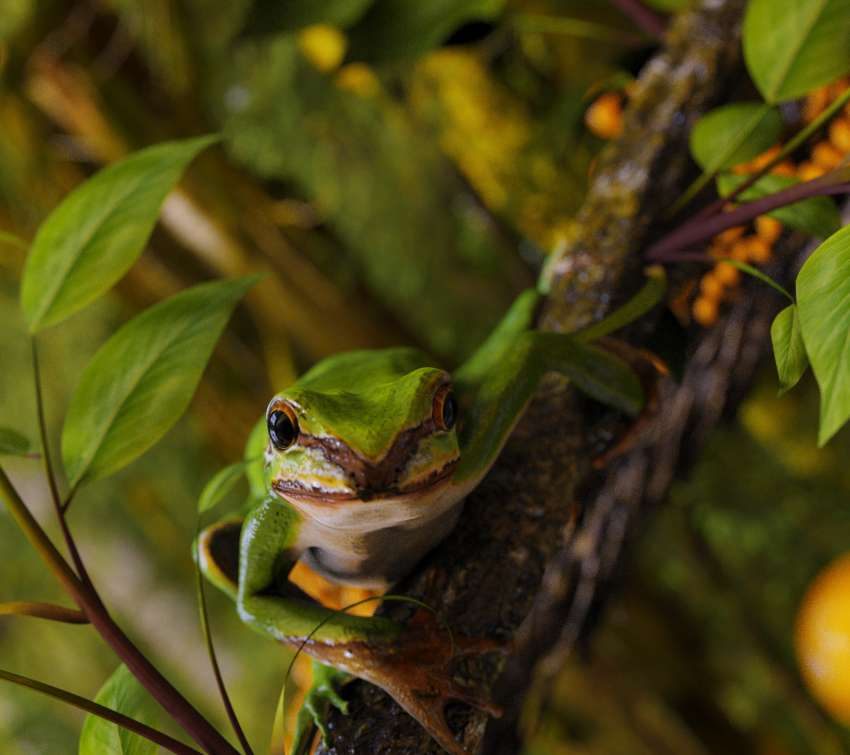 Green tree frog Mobile Horizontal wallpaper