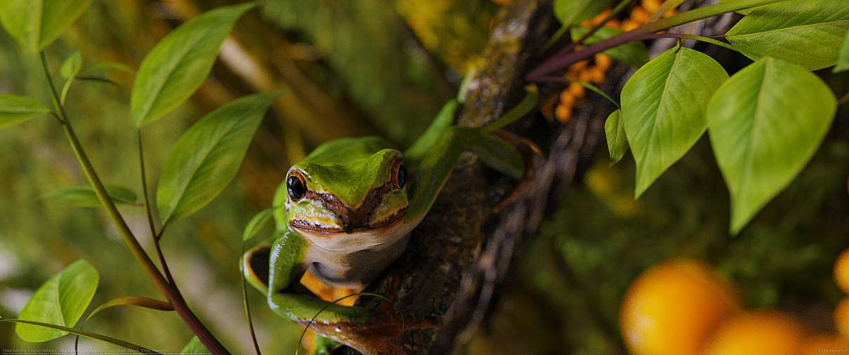 Green tree frog ultrawide wallpaper